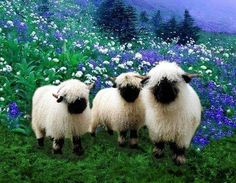 I love Valais Blacknose Sheep! Cloned several stock images to create design for … I love Valais Blacknose Sheep! Cloned several stock images to create design for my coffee mug and iPhone. Cute Baby Animals, Farm Animals, Animals And Pets, Funny Animals, Beautiful Creatures, Animals Beautiful, Valais Blacknose Sheep, Tier Fotos, Pet Birds