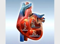 Artwork showing men exercising in the chambers of the heart, representing the link between exercise and a healthy heart.    Credit: Oliver Burston, Wellcome Images.