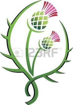 Thistle illustration floral emblem of Scotland Stock Vector