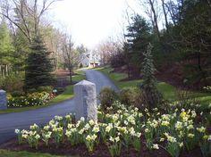 Spring Landscapes - traditional - landscape - boston - by NatureWorks Landscape Services, Inc.