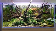 Planted Aquarium, Betta, Aquascaping, Scp, Fish Tank, Plants, Animals, Tropical Freshwater Fish, Angelfish