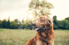 Dog in the city park royalty-free stock photo