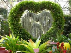 Heart topiary that changes to beautiful rose. Beautiful Gif, Beautiful Roses, All Kinds Of Everything, Gif Animé, Topiary, Cactus Plants, Green Colors, Animation, The Originals