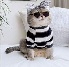 Kitten Names, Cat Names, Baby Animals, Cute Animals, Pet Trainer, Cat Bag, Cute Baby Cats, Cat Behavior, Cat Breeds