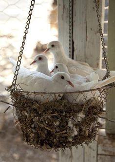 A nestful of pigeons