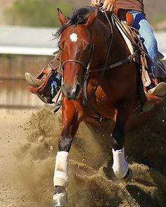Reining barrel racing rodeo western ranch cowboy cowgirl farm show performance equine horse equestrian pony quarter charro vaquero gymkhana sliding stop