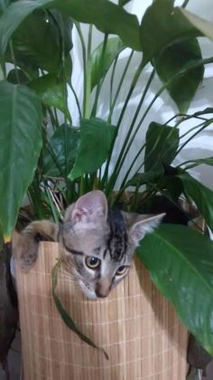 148 Cat-Plants You Probably Shouldn't Water My Flower, Flower Pots, Cat Plants, Rare Cats, Warm Bed, Owning A Cat, Perfect Plants, Cat Sleeping, Red Panda