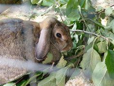 Peukkulan puput syövät terveellisesti ja voivat iloisesti. #TravelFinland #Themepark #jyvaskyla