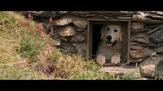 Directed by : Nicolas Vanier Produced by : Radar Films, Epithète Films Genre: Fiction - Runtime: 1 h 38 min French release: Production year: 2012 . Nicolas Vanier, Belle And Sebastian, Fiction, Film Genres, Cinema, English, Great Pyrenees, Wild Dogs, French Films
