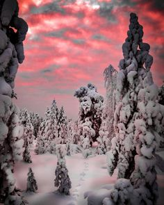 Eyes & Heart wide open 👀♥ Come see what I see when I walk in my snowy woods ♥ 👀 Cause Somedays girls just need to talk to trees 🤗♥ Magical… Snowy Woods, Lapland Finland, Come And See, Winter Snow, Northern Lights, Trees, Heart, Girls, Outdoor