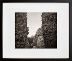The Pinetum, Wakehurst Place, by Beth Dow