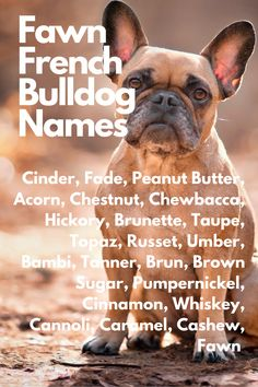 When you are anxiously waiting for your French Bulldog to join you, you may be thinking about French Bulldog names....Cinder, Fade, Peanut Butter, Acorn, Chestnut, Chewbacca, Hickory, Brunette, Taupe, Topaz, Russet, Umber, Bambi, Tanner, Brun, Brown Sugar, Pumpernickel, Cinnamon, Whiskey, Cannoli, Caramel, Cashew, Fawn #FrenchBulldog #FrenchBulldogs #FrenchBulldogpuppy #FrenchBulldogpuppies #TheFrenchBulldog #cuteFrenchBulldogs #FrenchBulldogVideos #Frenchies #FawnFrenchBulldogs Blue Fawn French Bulldog, French Bulldog Names, French Bulldog Puppies, French Bulldogs, Cinnamon Whiskey, Brown Sugar, Peanut Butter, Join, French Bulldog Pups