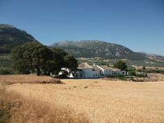 a view of the cortijo across the wheat field