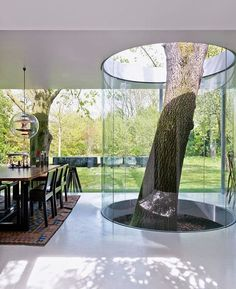 this house has a large tree growing through it. The tree was surrounded by a glass cylinder and it pierces the floor and the roof. It's a really interesting feature, perfect for the dining space and living area.