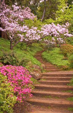 Spring at Hakone Japanese Garden just outside of San Jose, California.Copyright 2015 Susan Rissi TregoningGroup Features:The Gallery Wall Some Beautiful Images, Beautiful Places, Beautiful Wall, Garden Park, Lawn And Garden, Garden Stairs, California Art, Garden Structures, Backyard Landscaping