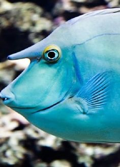 Unicorn Fish Found on st3ramone.deviantart.com