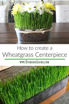 How to create a wheatgrass centerpiece.