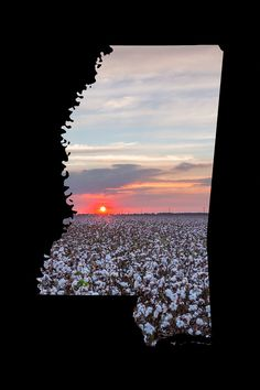 Sunset over a Mississippi cotton field at Indianola in a Mississippi outline.