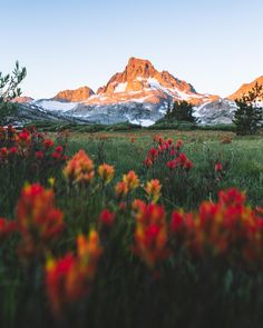 field of indian paintbrush at sunrise Landscape Photography, Travel Photography, Photography Aesthetic, Photography Tips, Urban Photography, Aerial Photography, Night Photography, Landscape Photos, White Photography