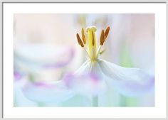 Jenny Rainbow Fine Art Photography Framed Print featuring the photograph Amaranthine Beauty by Jenny Rainbow Framing Photography, Fine Art Photography, All Flowers, Beautiful Flowers, Frame Shop, Hanging Wire, Clear Acrylic, Home Art, Fine Art America