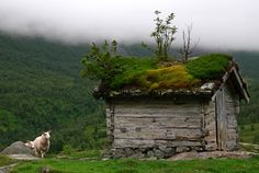 I'm guessing Scandanavia, sod roof hut with sheep