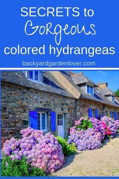 Have you seen hydrangea flowers in colors that made you smile? Colors ranging from pale pink, or powder blue, to deep purples and soft lavender? Here are the secrets to gorgeous hydrangea colors (video included) Hydrangea Bush, Hydrangea Colors, Hydrangea Care, Hydrangea Flower, Growing Ginger Indoors, Growing Herbs In Pots, Herb Garden Design, Diy Herb Garden, Hortensia Rose