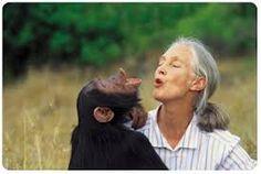 Valerie Jane Morris Goodall (Londres,  1934) es una naturalista, activista y primatóloga inglesa que ha dedicado su vida al estudio del comportamiento de los chimpancés en África y a educar y promover estilos de vida más sostenibles en todo el planeta.  Es Mensajera de la Paz de Naciones Unidas y cuenta con más de 100 premios internacionales por su labor científica y su activismo ambiental. Fue galardonada en España con el Premio Príncipe de Asturias de Investigación Científica y Técnica en…