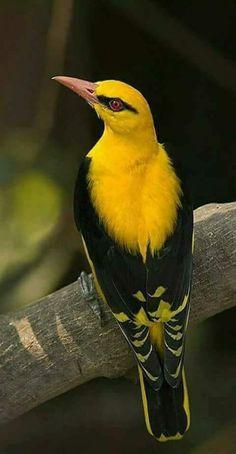 Reproduccion de las aves yahoo dating