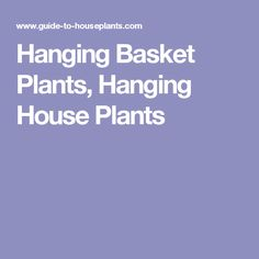 Hanging Basket Plants, Hanging House Plants