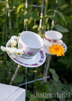 Vanhat posliinit voi hyödyntää esimerkiksi näin – kasvien tukikeppien nuppeina! Kuva: Teija Tuisku Tableware, Dinnerware, Tablewares, Dishes, Place Settings