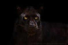 I'll Be Black! by Ashley Vincent, via 500px