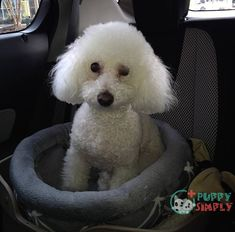 The best dog car seats are an excellent option for dog owners who want to take their beloved pup with them everywhere but don't want a traffic accident. They ke