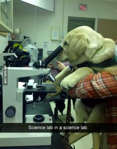 Labception