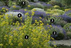 1 : Bupleurum fruticosum  2 : Lavandula x intermedia 'Hidcote Giant'  3 : Achillea clypeolata  4 : Lavandula x intermedia 'Alba'  5 : Nerium 'Angiolo Pucci'