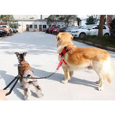 Adjustable Double Dog Leash - Dog Accessories
