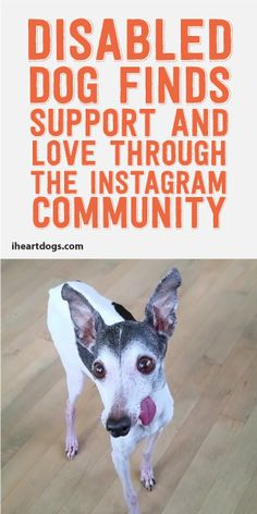 Disabled Dog Finds Support And Love Through The Instagram Community! <3
