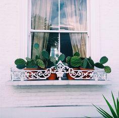 Cactus Window Box.