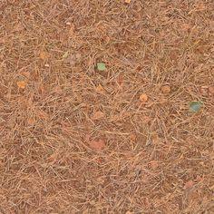 Seamless Dirt and Pine Needles Texture + (Maps) | texturise