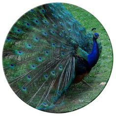 Gorgeous Indian Peacock Peafowl Paon plate
