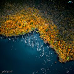 Colours above the forest by Jordan  Cantelo on 500px