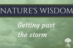 Nature's Wisdom: Getting past the storm
