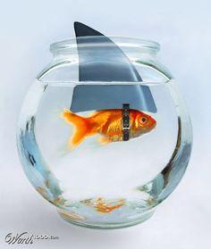 Gutsy Goldfish