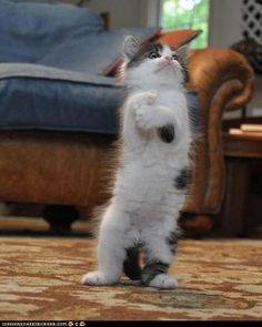 Tis kitty wants to play a sax...