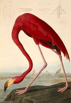 john james audubon (1827-1838) published approximately 200 sets of the the double elephant folio 'birds of america'.  each set contained 435 illustrative plates produced from a copperplate engraving and then colored by hand.