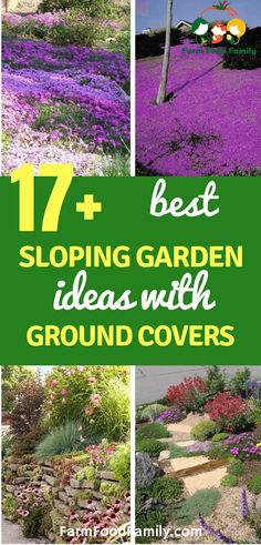 Sloping Garden Ideas with Ground Covers - FarmFoodFamily Close to natur. Sloped Yard, Sloped Backyard, Backyard Ideas, Rustic Outdoor Decor, Outdoor Ideas, Landscaping A Slope, Ground Cover Plants, Ground Cover Shade, Garden Inspiration