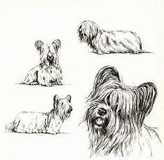 Vintage SKYE TERRIER DOG Dogs Art Print Skye Terrier, Terrier Dogs, Terriers, Yorkshire, Cute Poster, Art Prints, Winchester, Drawings, Stitching