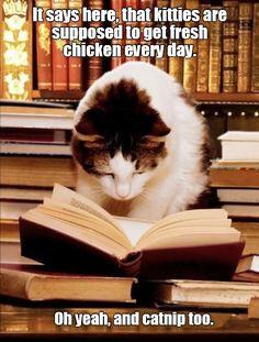 Book Worm http://cheezburger.com/9045315584