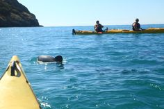 A very nice kayaking trip with the Hector dolphins swimming around our kayaks at Flea bay with #Pohatu_penguins
