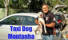 TAXI DOG MONTANHA TRANSPORTE DE ANIMAIS NO RIO DE JANEIRO: MACAÉ para ARARUAMA