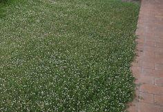 Giardino secco: dicembre 2012